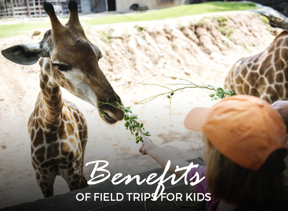 Learn the Benefits of Field Trips for Kids