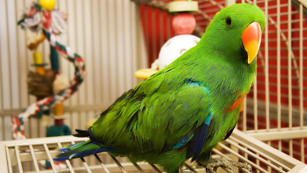 The Pros and Cons of Pet Birds