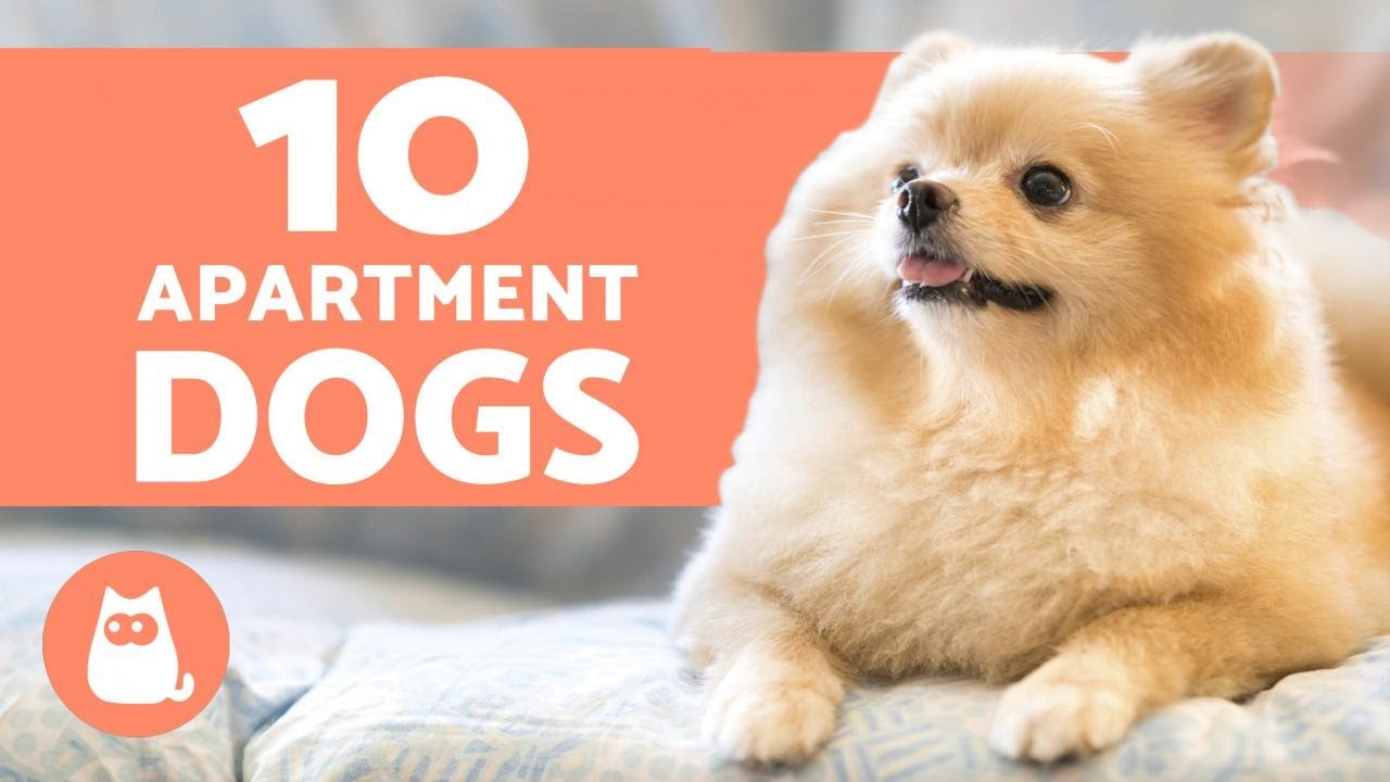 Best Dogs for Small Spaces - Discover Them Here