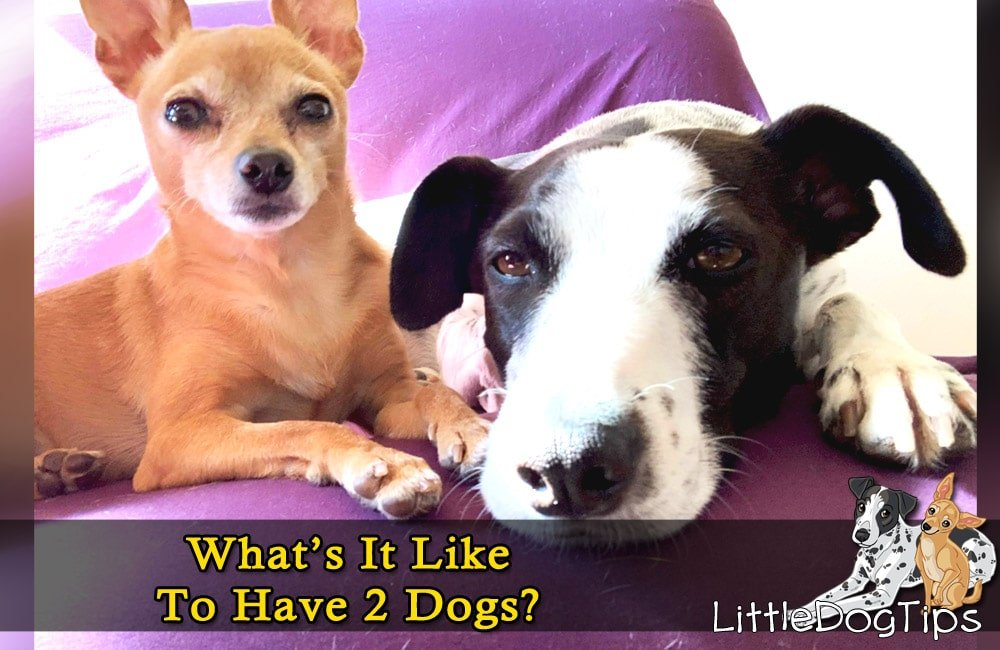 Getting a Second Puppy Tips - See Here