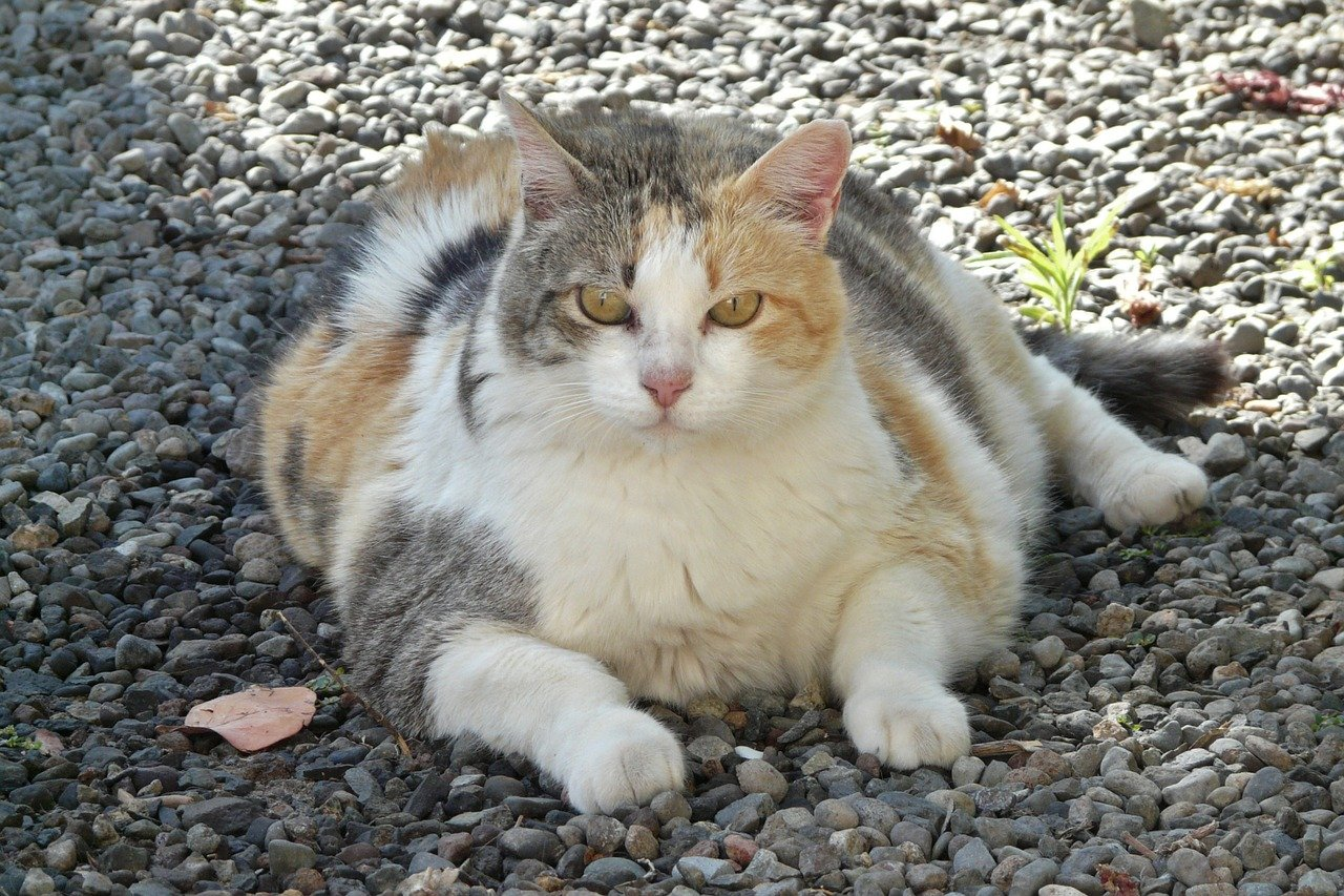 Cat Diet Tips to Pay Attention To